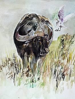 Buffalo by Khalid Saeed
