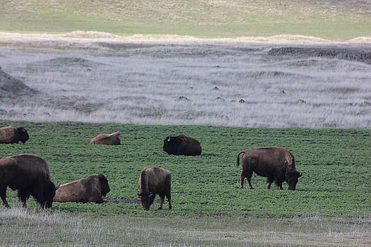 Buffalo Range by Linda Meyer