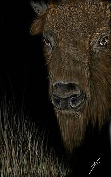 Buffalo roam by Darren Cannell