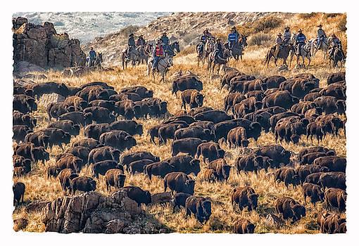 Buffalo Roundup by Kristal Kraft