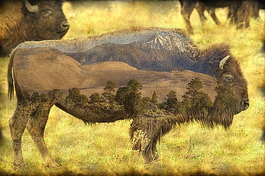 James BO  Insogna - Buffalo Sand Dunes
