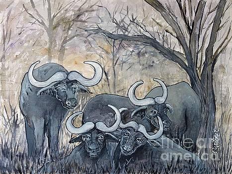 Caroline Street - Buffaloes in the Bushveld