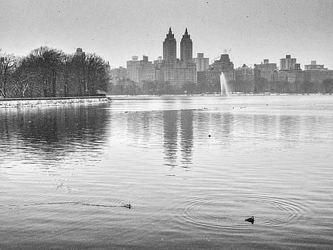 Buffelhead Ducks on the Reservoir by Cornelis Verwaal