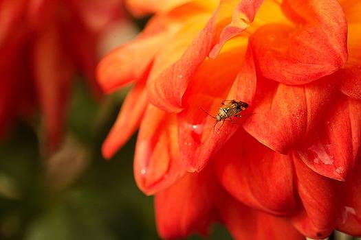 Bug and Flower by Amanda Kiplinger