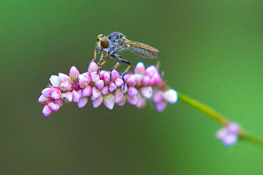 Bug Eyed by Frank Pietlock