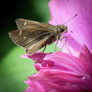 Bug On A Flower by John Benedict