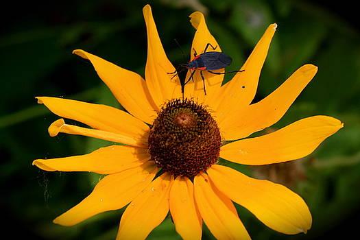 Sherri Williams - Bug on a Flower