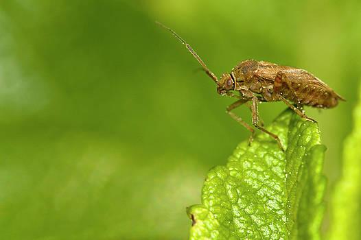 Bug on a leaf by Jouko Mikkola
