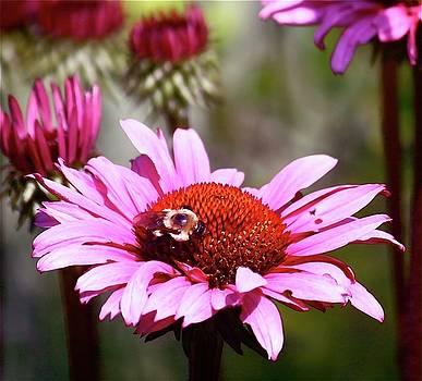 Bug on Flower by Natalia Radziejewska