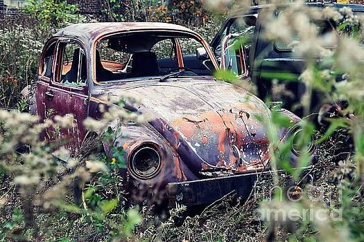 Bug by Patrick Rodio