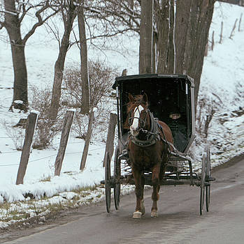 Buggy Wrap - Amish Edge of Winter by Susie Gordon