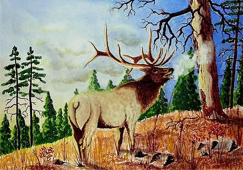 Bugling Elk by Jimmy Smith