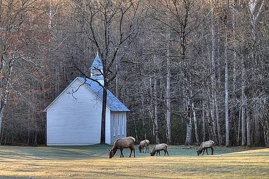 Carol Montoya - Bull Elk Attending Palmer Chapel  in the Great Smoky Mountains National Park