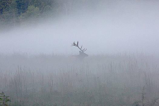 Bull Elk in Fog - September 30, 2016 by D K Wall