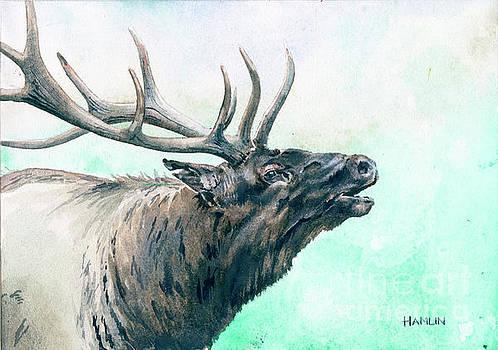 Bull Elk Study by Steve Hamlin