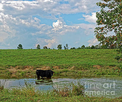 Bull In A Pond by Paul Mashburn