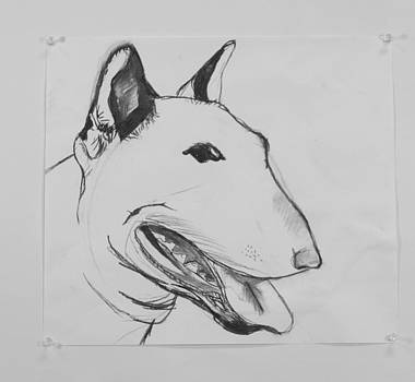 Bull Terrier by Emory Goins