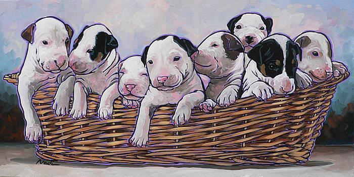 Bull Terrier Pups by Nadi Spencer