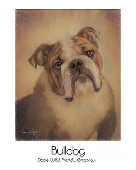 Bulldog Poster by Tim Wemple
