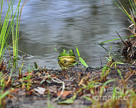 Bullfrog Blending by Al Powell Photography USA