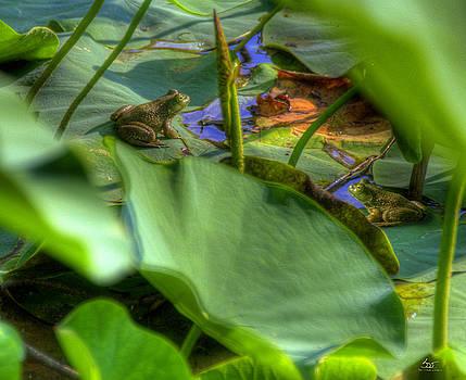 Bullfrog Meeting by Sam Davis Johnson