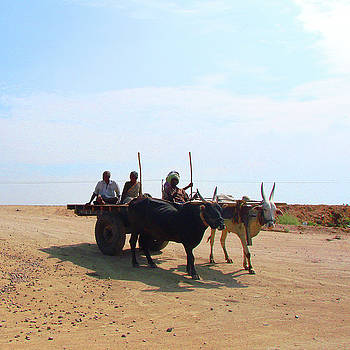 Bullock Cart near Dhone, Andhra Pradesh, India by Iqbal Misentropy