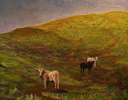 Bulls on Figueroa Mt. by Trish Campbell