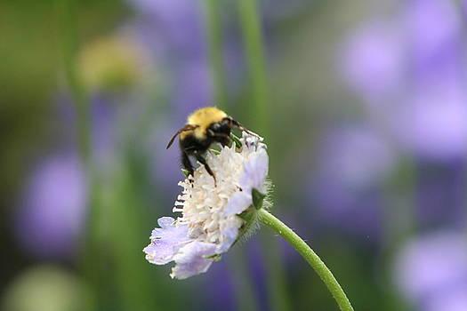 Bumble Bee on Purple by Wendy Munandi
