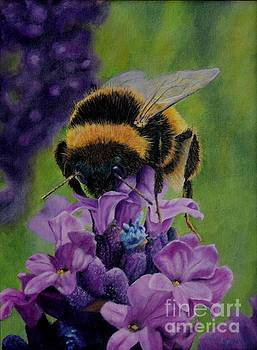Bumble Bee by Sid Ball