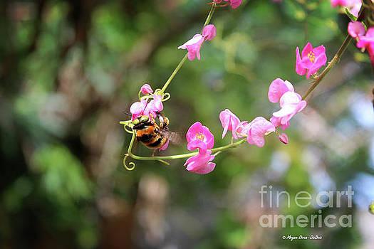 Bumble Bee1 by Megan Dirsa-DuBois