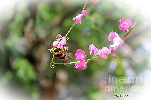 Bumble Bee2 by Megan Dirsa-DuBois