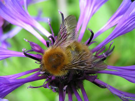 Rasma Bertz - Bumblebee in Blue
