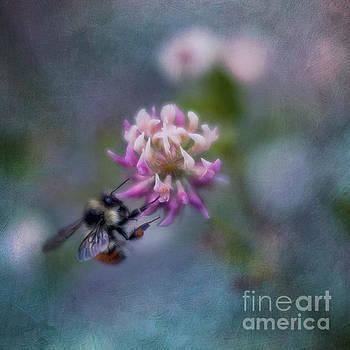 Bumblebee on Clover Blossom by Priska Wettstein