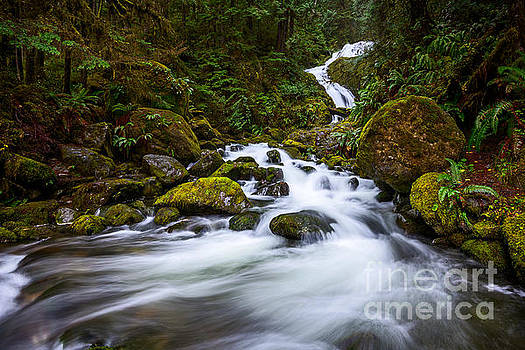 Jamie Pham - Bunch Creek Falls in the Olympic National Park of Wash
