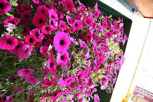 Chuck Kuhn - Bunch  Flowers