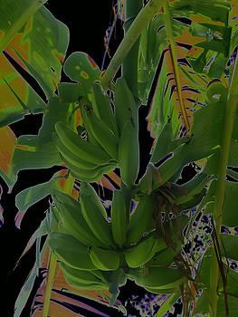 Roger Mullenhour - Bunch of Bananas
