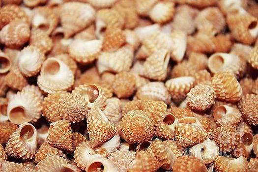 Paulette Thomas - Bunch of Sea Shells