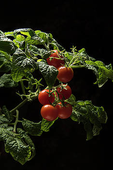 Bunch of tomatoes on a black background by Sergei Dolgov