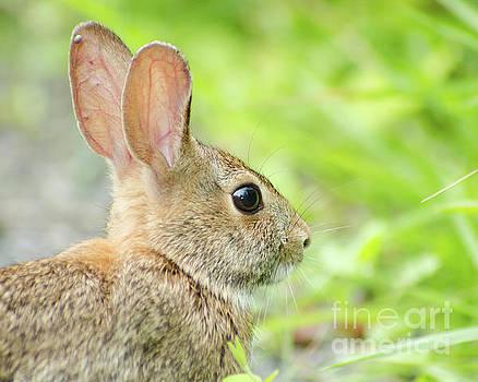 Bunny at Bombay Hook Wildlife Photo by Melissa Fague