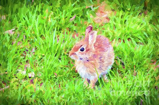 Bunny Beautiful by Kerri Farley