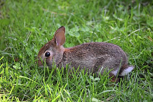 Bunny Bounty by Maria Keady