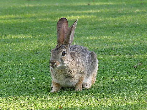 Bunny by Diane Greco-Lesser