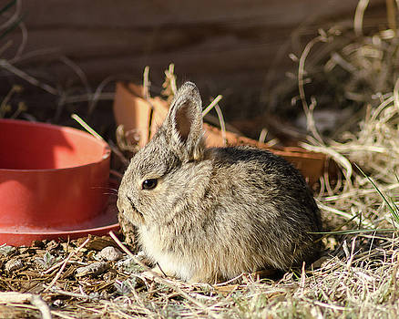 Bunny in the Garden by John Brink