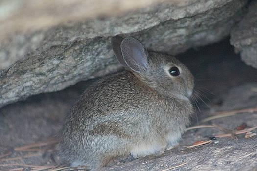 Bunny by Jodi Vetter
