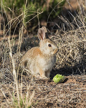 Bunny on Easter by Steven Natanson