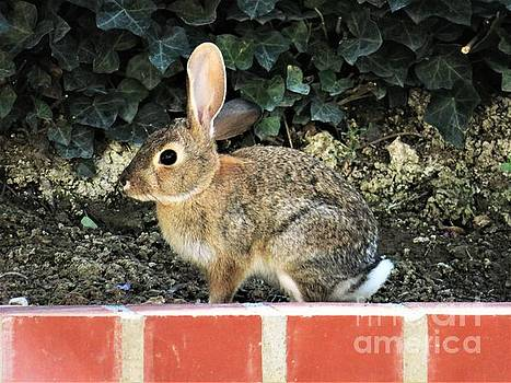 Bunny on My Wall by Laurie Morgan