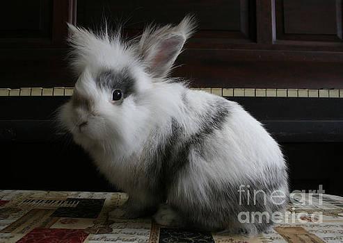Bunny Pianist by Lynn Jackson