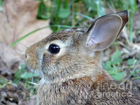 Bunny Portrait by Leara Nicole Morris-Clark