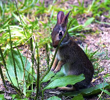 Bunny Snacks by Patricia Griffin Brett
