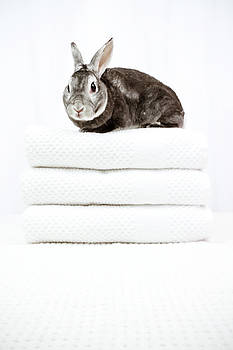 Bunny Spa by Jeanette Fellows